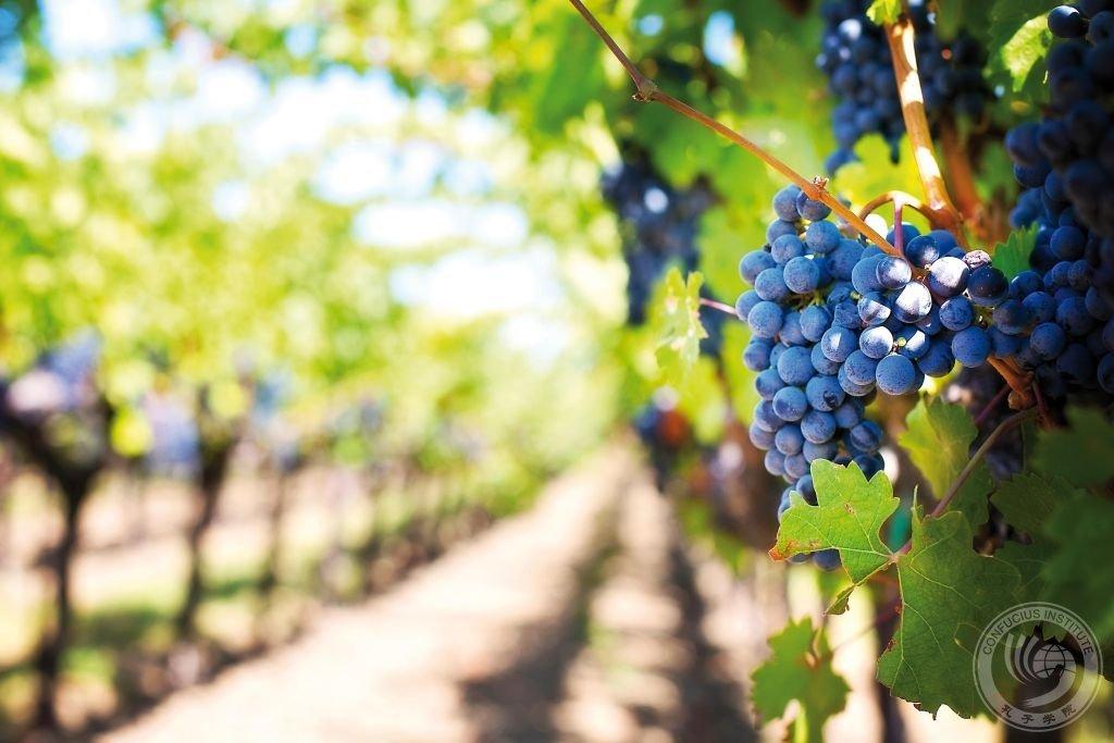 Vinhos chineses: a revolução vem aí